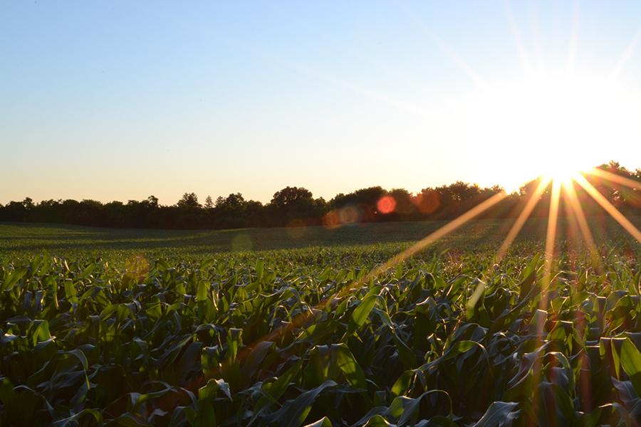 farming pandemic