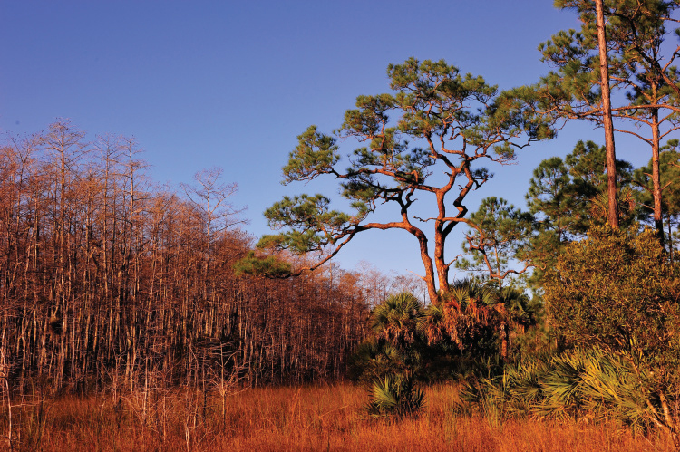 Big Cypress National Preserve; Florida Trail Hikes
