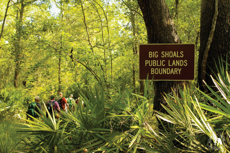 Bell Springs to Big Shoals Trail; Florida Trail hikes