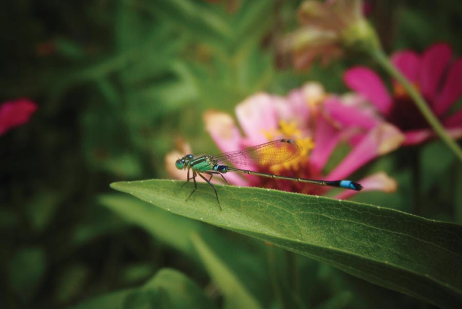 beneficial garden insects